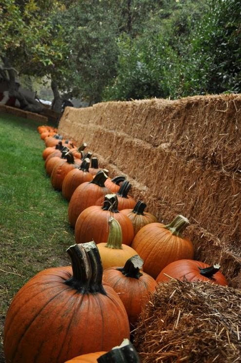 Irvine Park Railroad S Pumpkin Patch California Haunted