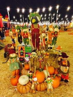 Johnson Brothers Pumpkin Patch And Harvest Festival