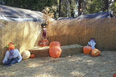 Pumpkin patch grass valley ca